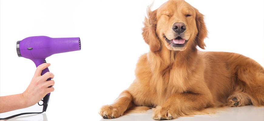 dog grooming springfield il