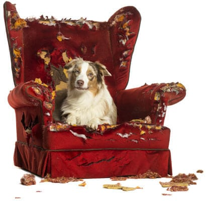 pet daycare services springfield il